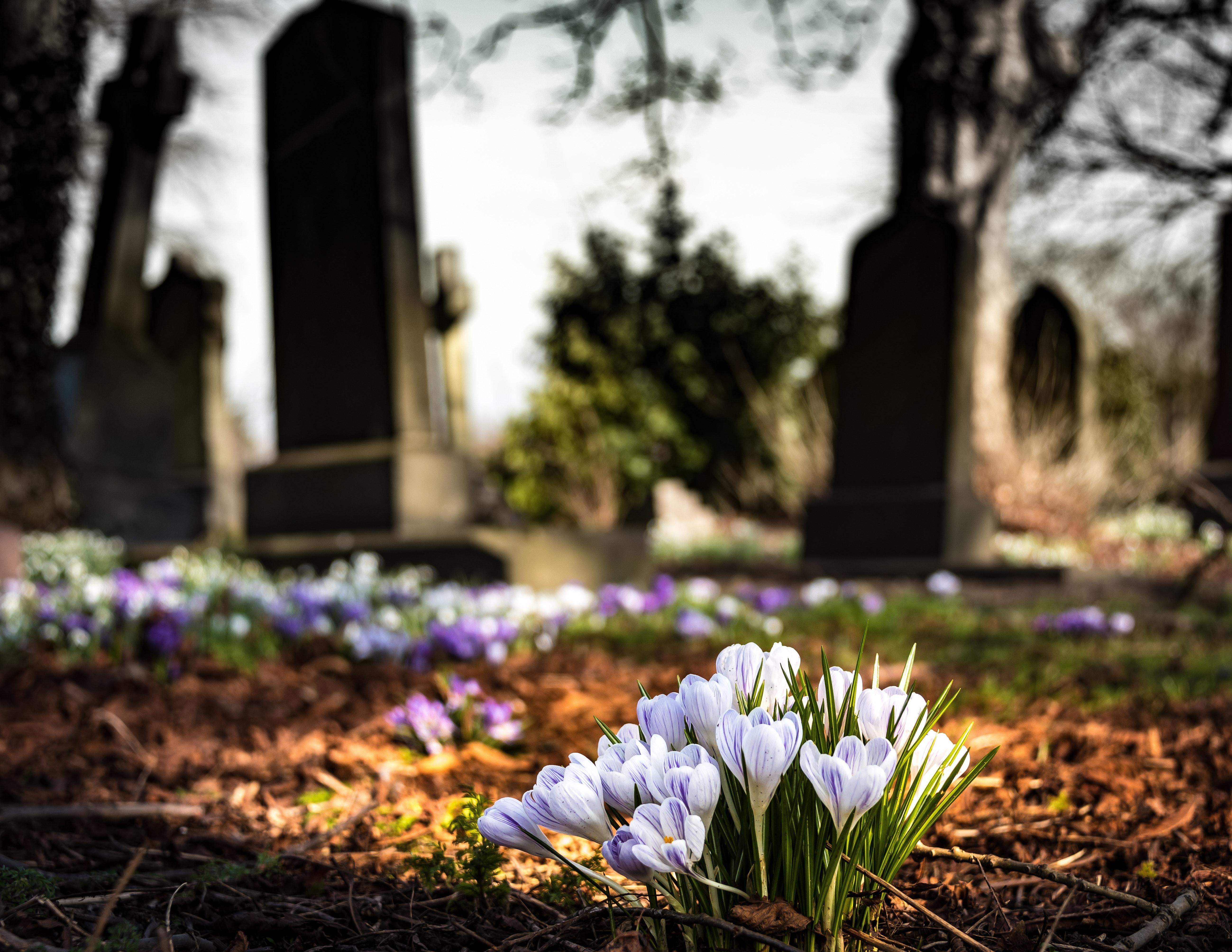 cimetière libre de droit